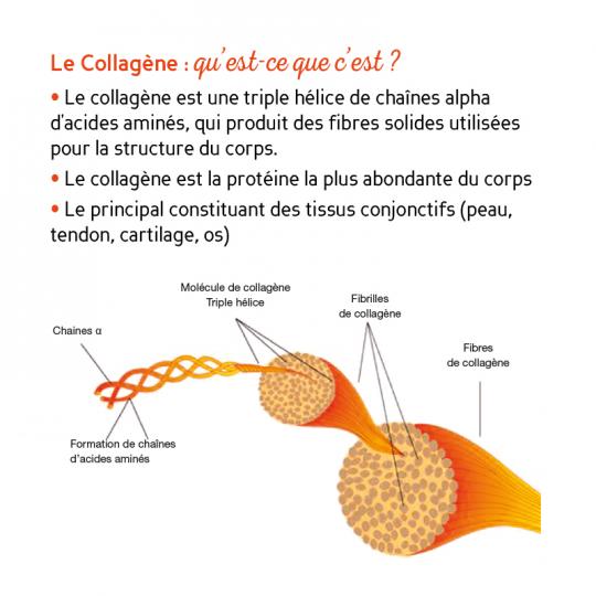 Biocyte Collagen express pour une peau lissée - 10 sticks