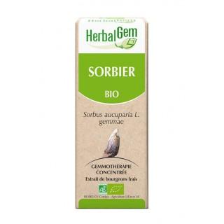 HerbalGem sorbier bio - 30ml