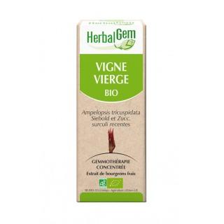 HerbalGem vigne vierge bio - 30ml