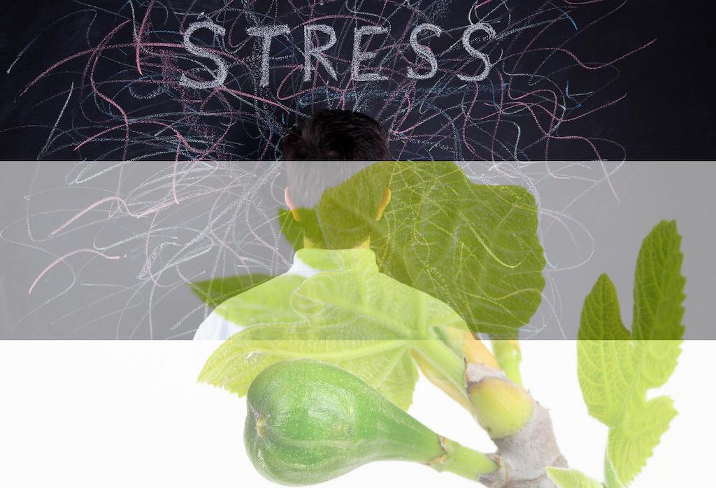 Lutter contre le stress avec la gemmothérapie